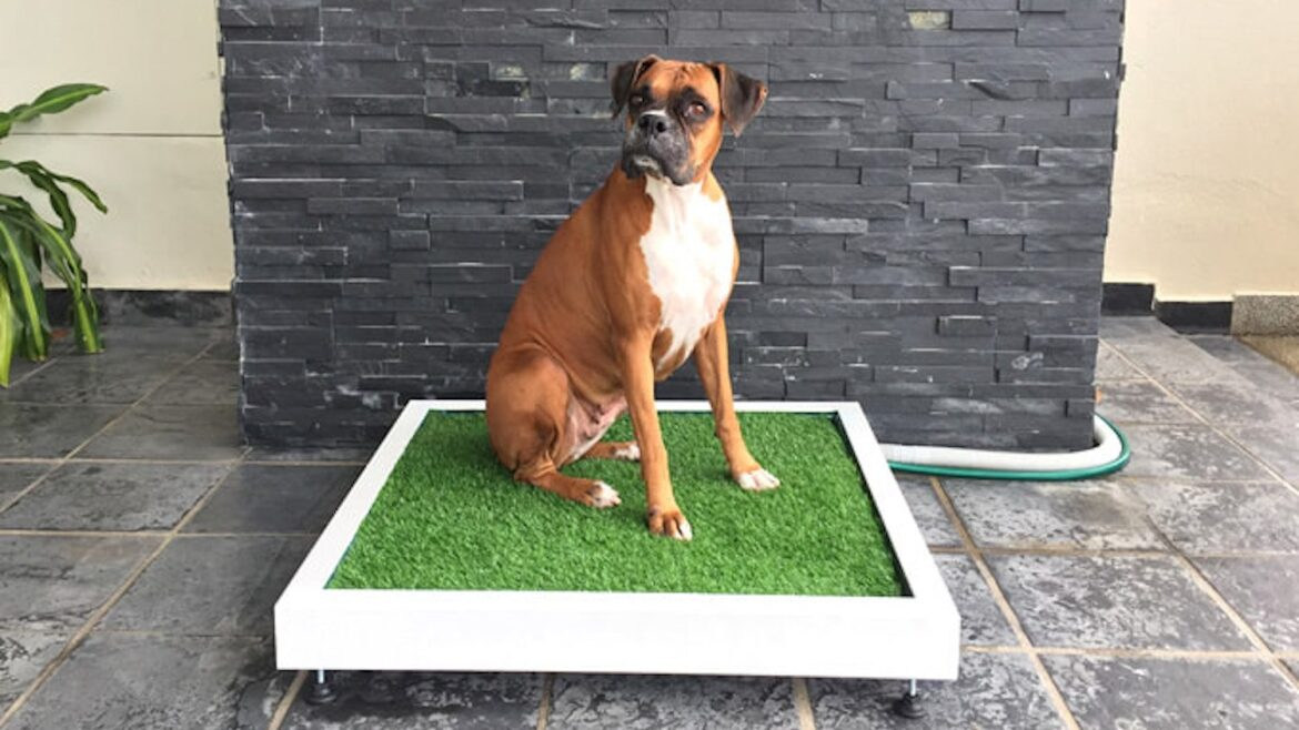 Artificial Grass for Pets: Best Options